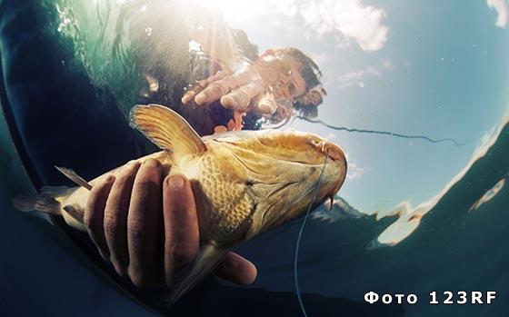 Беременной снится покупать рыбу 32